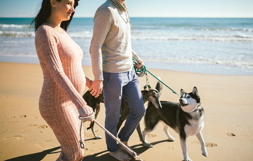 playa perros Murcia