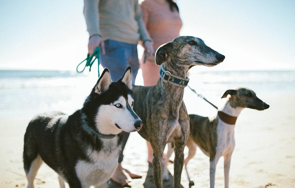 perros Calblanque